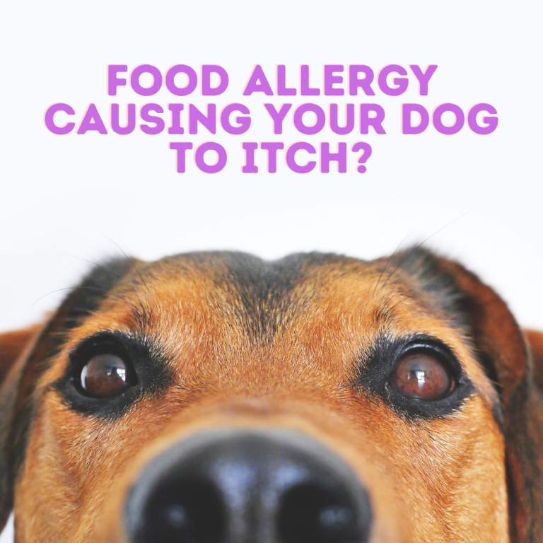 Food Allergy Causing Your Dog To Itch In 2020 Dog Instagram Captions Funny Dog Captions Dog Lovers