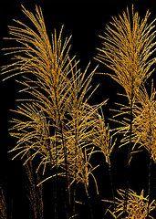 Orient Art - Porcupine Grass by Brian Stevens