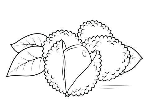whole and open lechees coloring page from lychee category select from 26690 printable crafts of