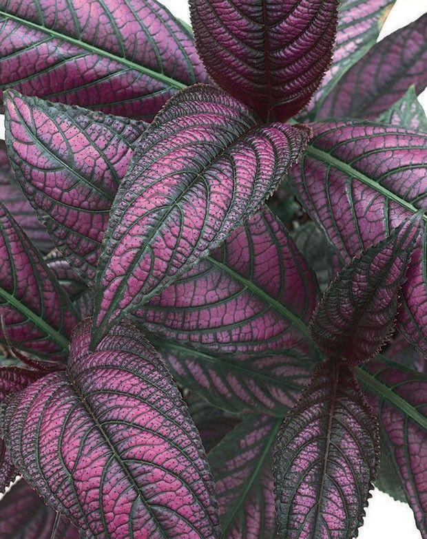 Cinco plantas que vão muito além do verde