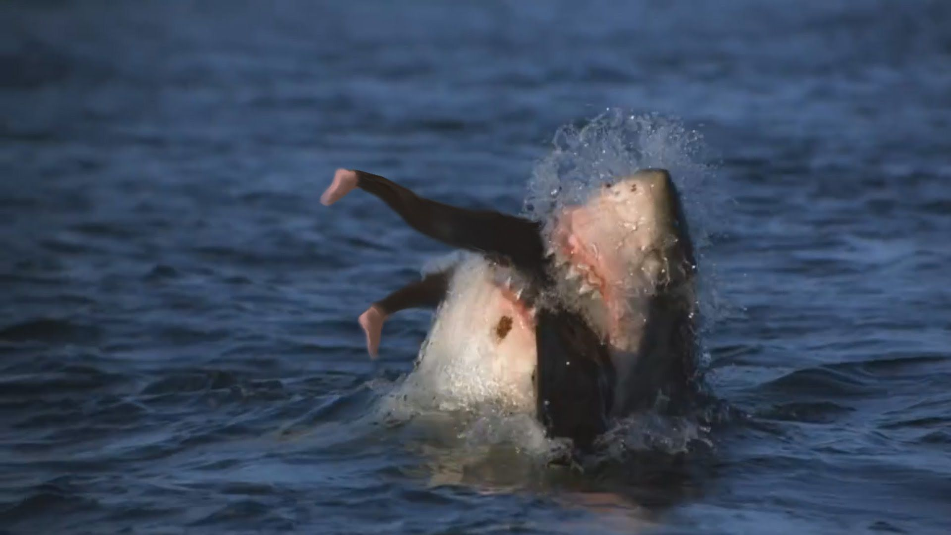 10 Most Dangerous Beaches For Deadly Shark Attacks With Images
