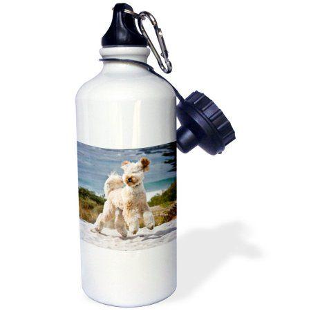 3dRose USA, California. Playful Labradoodle at Carmel Beach., Sports Water Bottle, 21oz, White