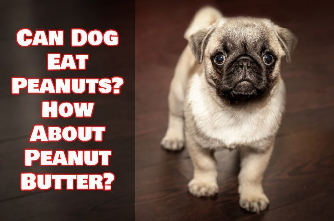 People Today Love To Eat Peanuts Or Peanut Butter Did You Know