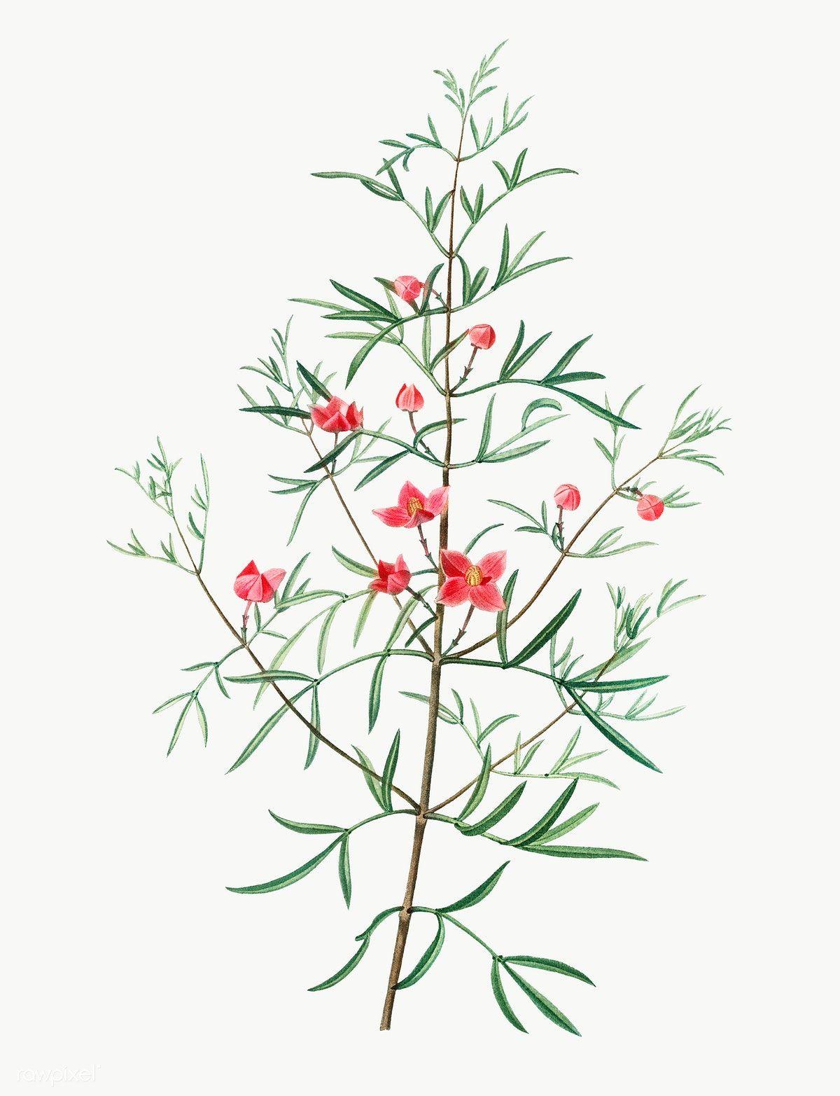 Pin On Vintage Illustration Flowers