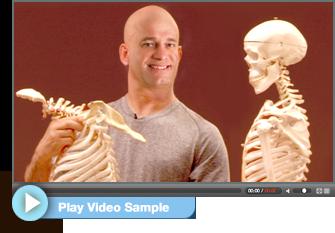 anatomy of shoulder stand  shoulder stand