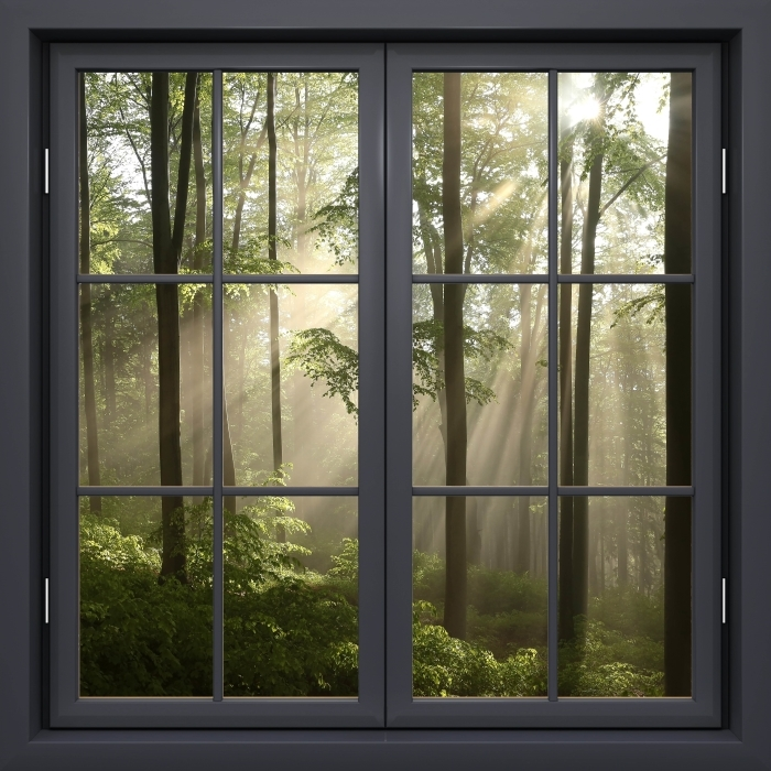 Black Window Closed Foggy Morning In Woods Wall Mural Pixers We Live To Change In 2021 Window Wall Mural Wall Murals Windows