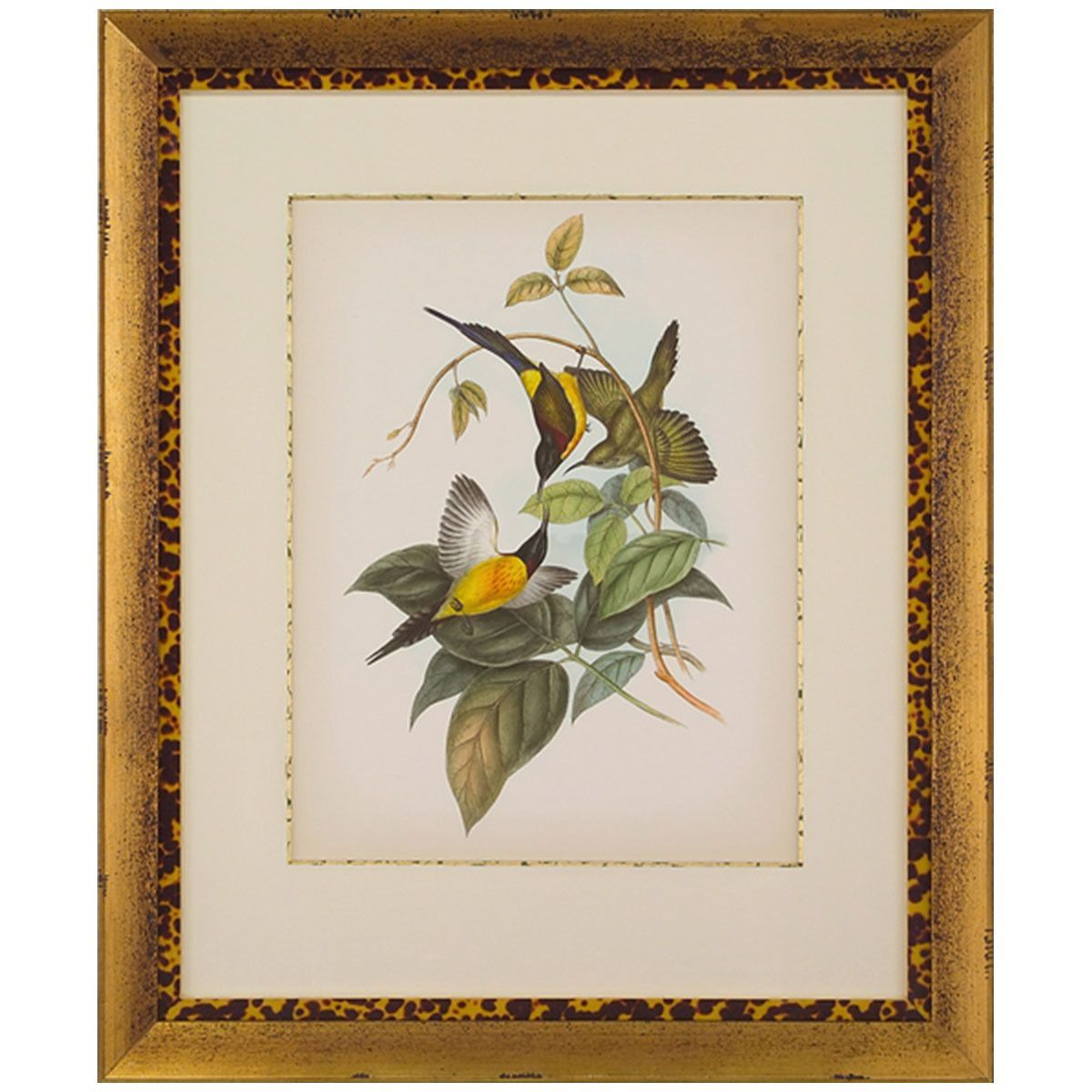 John Richard Gould Birds of The Tropics II Artwork