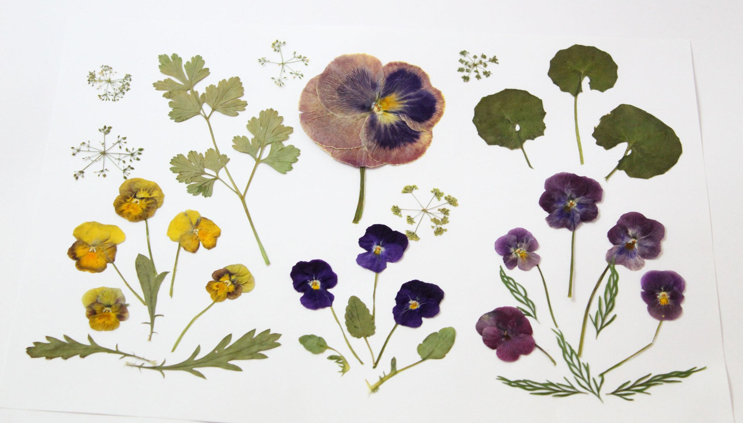 34 Pcs Mixed Dried Flowers And Pressed Leaves Pansy Viola Etsy In 2020 Flower Supplies Floral Supplies Pansies Flowers