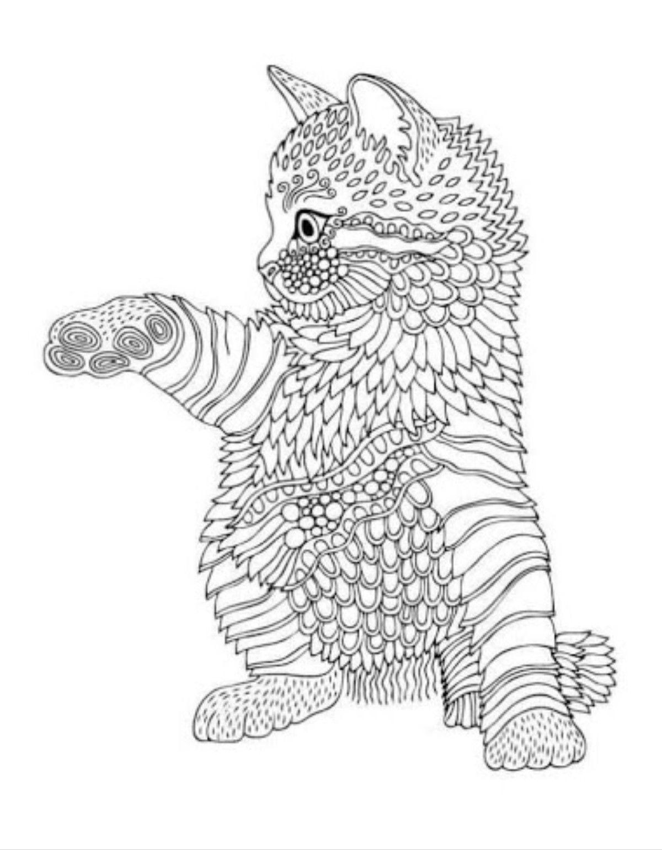 Susse Katze Volwassen Kleurboeken Kleurboek Dieren