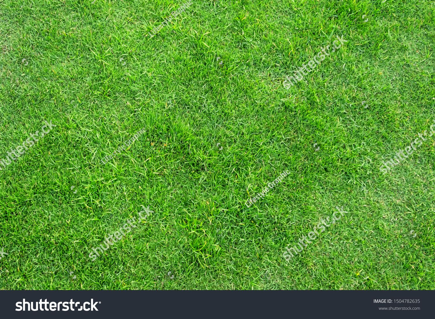 Green Grass Texture For Background Green Lawn Pattern And Texture