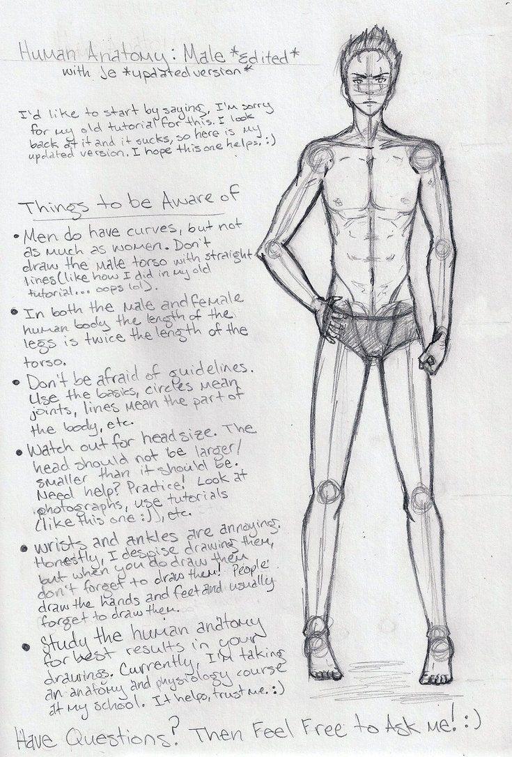 Male Anatomy Tutorial EDITED by shoujoartist on DeviantArt | Art ...