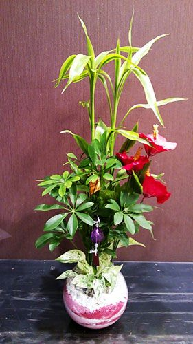 Houseplants cool Sanderiana, kapok, the pothos @Hanadokei Tokyo Tokyo