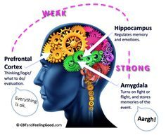 Amygdala Fight or Flight Response | moderate way during your day the extreme fight or flight crescendo is ...