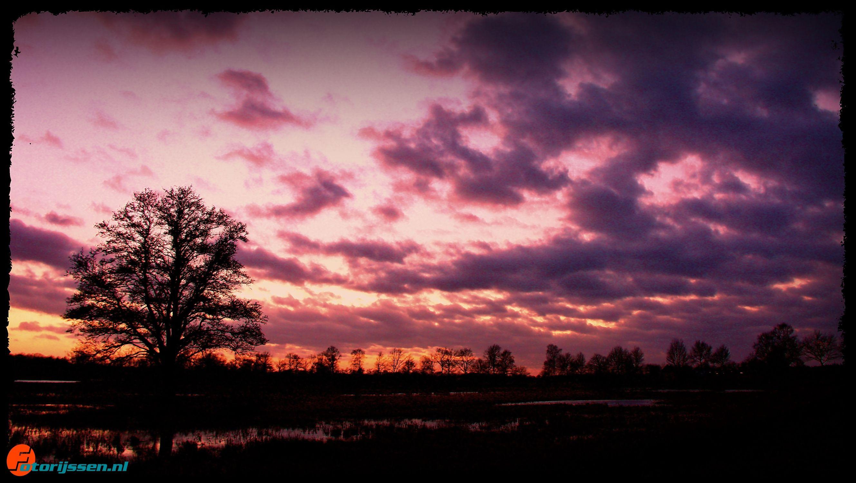 Zonsondergang in de nieuwe natuur bij de boom
