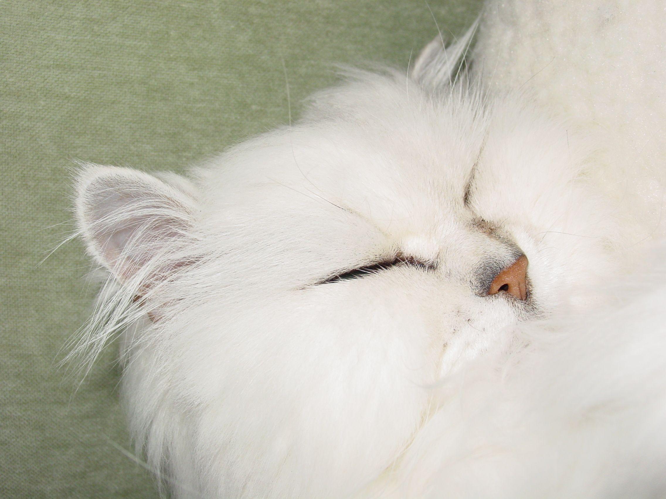Ium sound asleep so donut wake me up