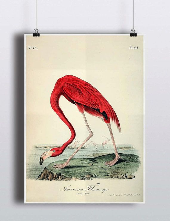 Hey, I found this really awesome Etsy listing at https://www.etsy.com/listing/231966600/antique-1800s-flamingo-print-pink