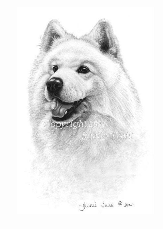 11 X 14 Samoyed Art Print From Original Pencil Drawing By Jennie