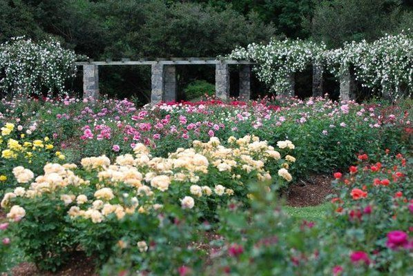 Raleigh little theater rose garden this place is special to us because we had our wedding for Raleigh little theater rose garden