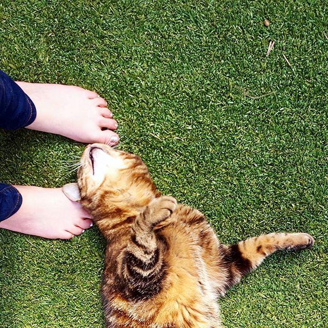 WEBSTA @ clai.ben - Un temps parfait pour profiter de la terrasse   #love #cat #pet #outdoor #sun