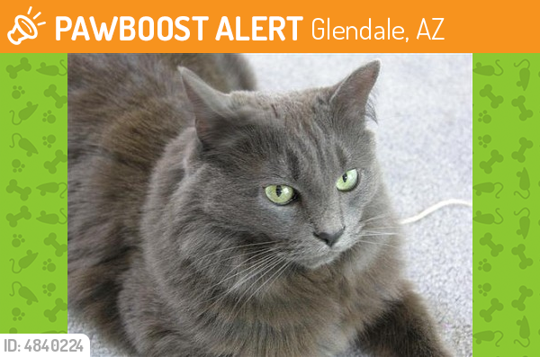 LOST December 09, 2017 Glendale, AZ 85308 Near W Bell Rd