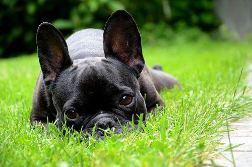 (Happy) dog. - http://www.1pic4u.com/blog/2014/09/29/happy-dog-5/