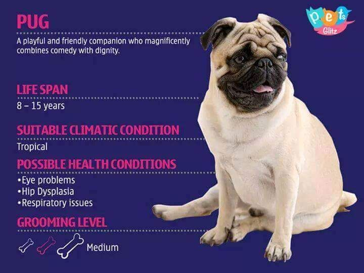 Which Kind Of Dog Is Best For You Eyes Problems Pugs Hip
