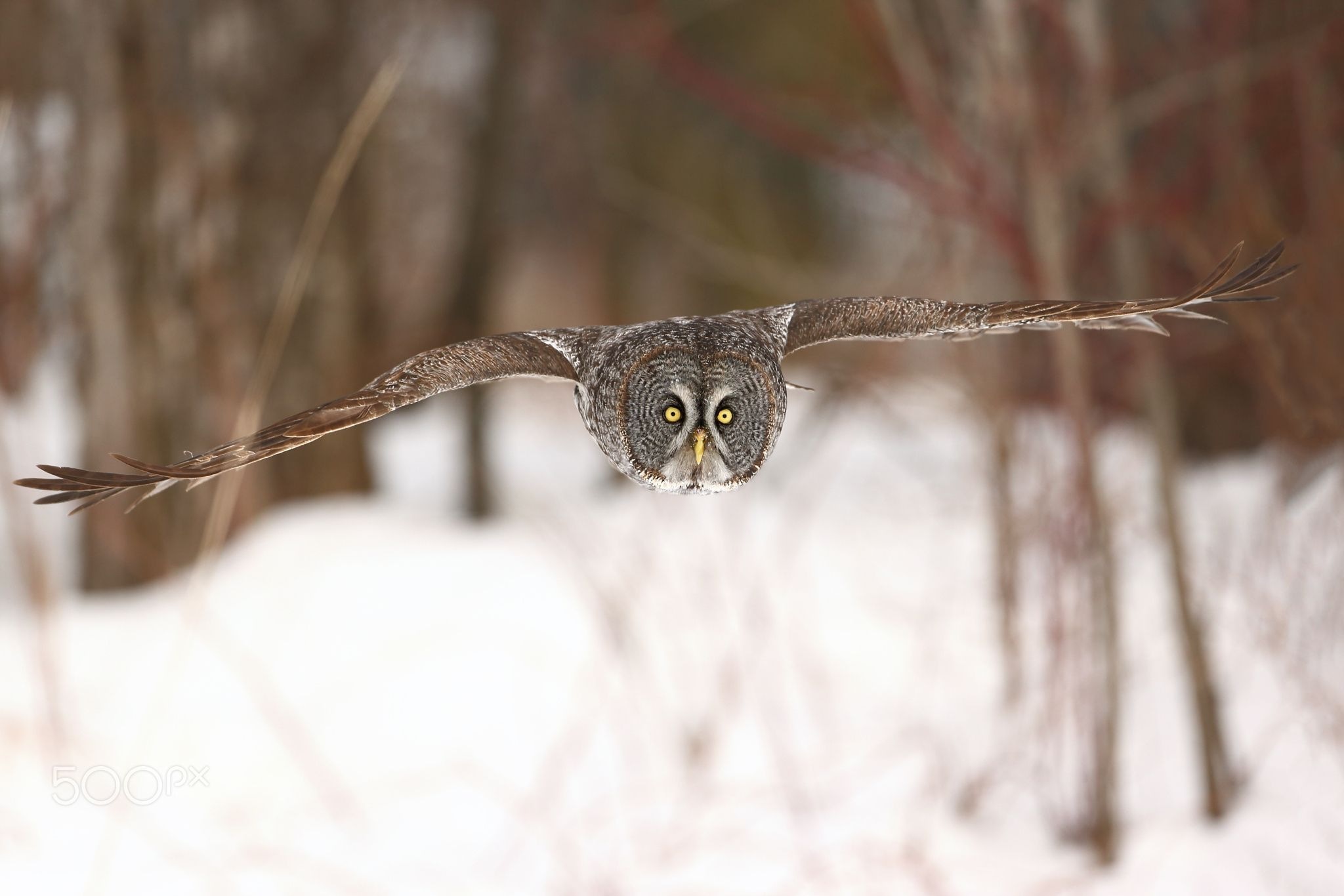 Camouflage by Denis Dumoulin on 500px