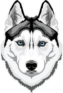 Pin By Federico Mendez On Husky Husky Drawing Dog Sketch Husky Tattoo Siberian