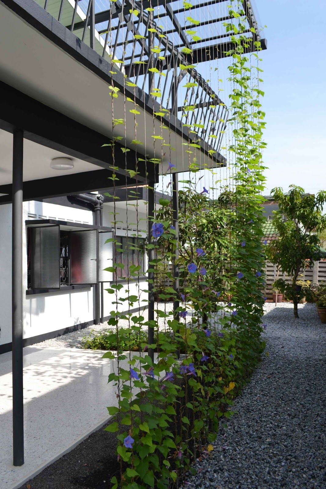 morning glory against existing vent-block wall         trellis system - stainless steel cables           morning glory and stainless ste...