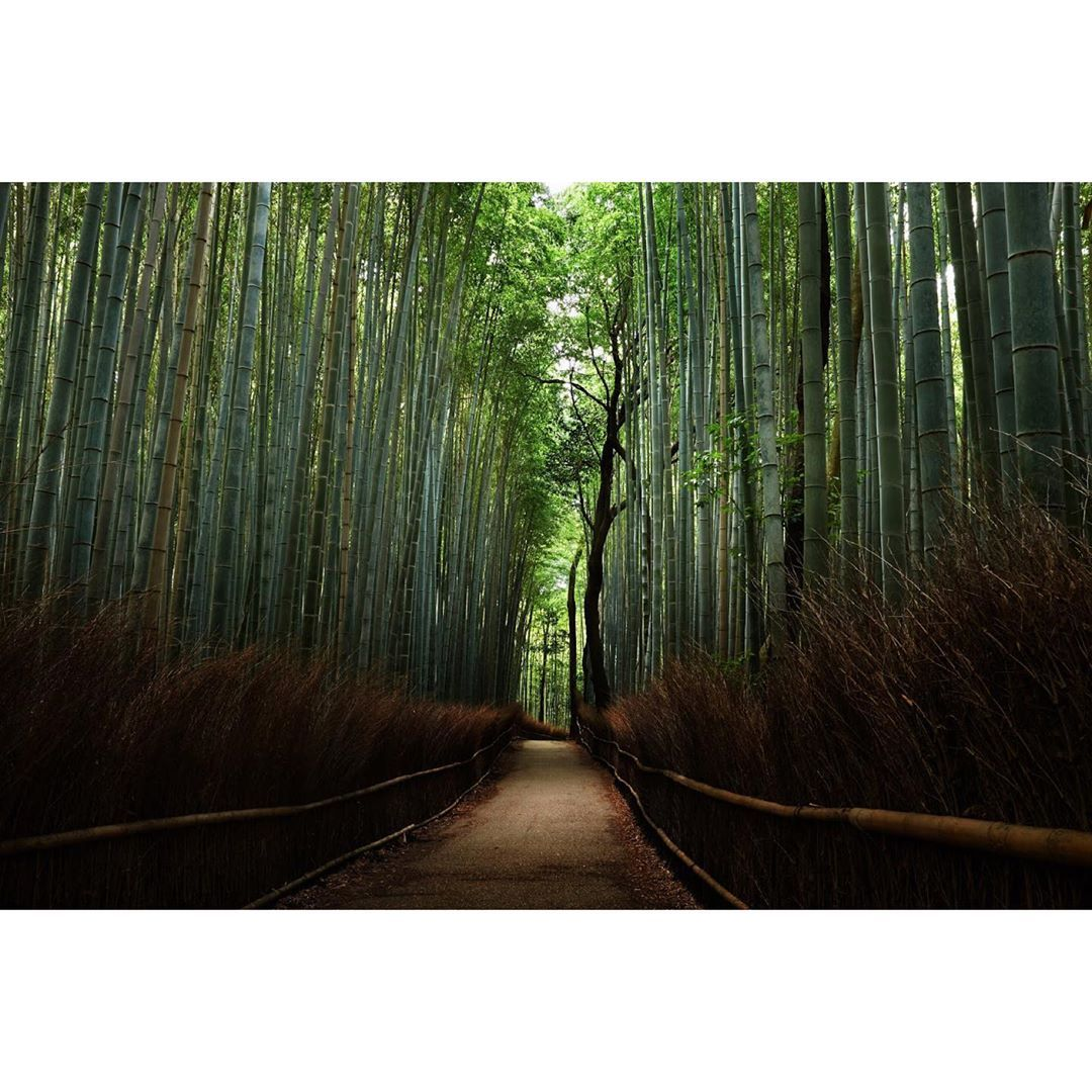 Arashiyama - Bamboo Forest #arashiyama #arashiyamabambooforest #japan #forest #amazing #beautiful #summer #2017 #fujifil...