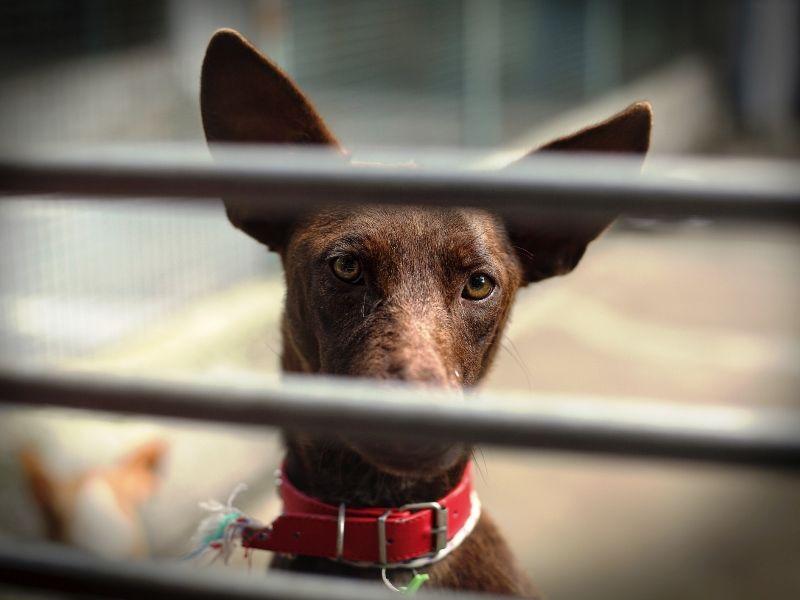 A importância de castrar animais de estimação | #CuidadoAnimal #cachorro #gatos