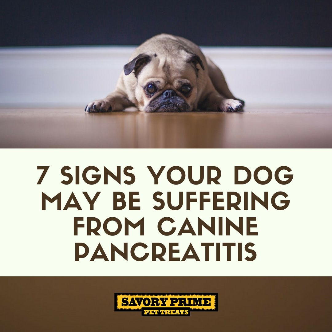 When Your Family Dog Doesn T Want To Eat And Is Throwing Up You Hope It S A Passing Thing Many Times It Is B Canine Pancreatitis Dogs Pancreatitis In Dogs