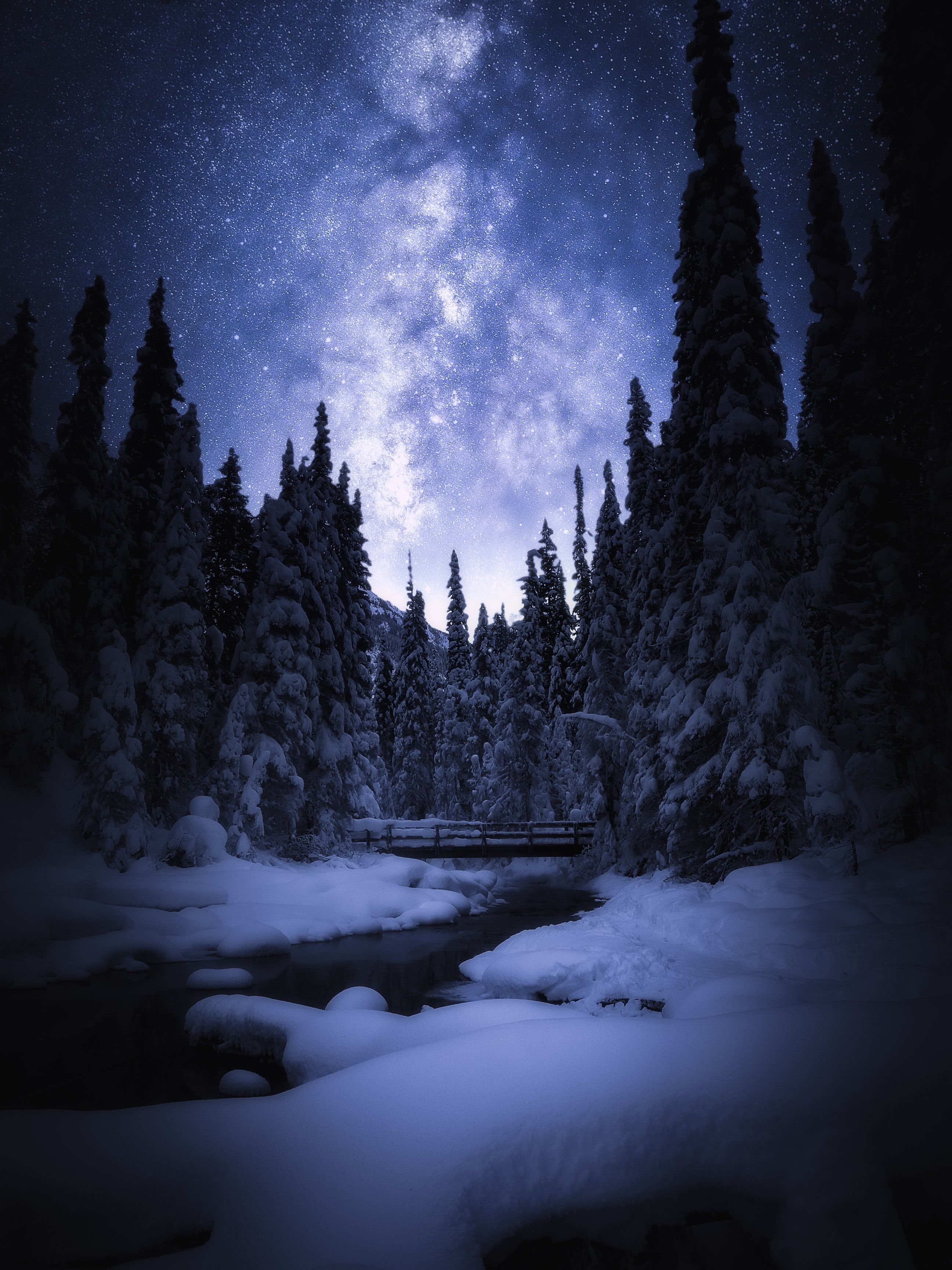 Snow Covered Pine Trees During Nighttime Night Landscape Cheap Places To Visit Landscape Poster