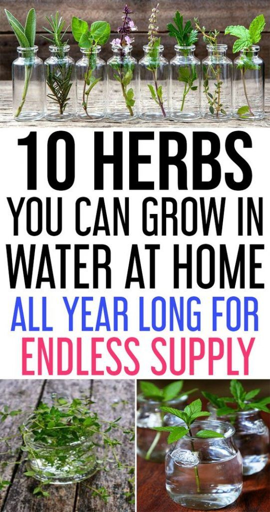 The best thing about herbs is that some of them can be - Herbs that can be grown indoors ...