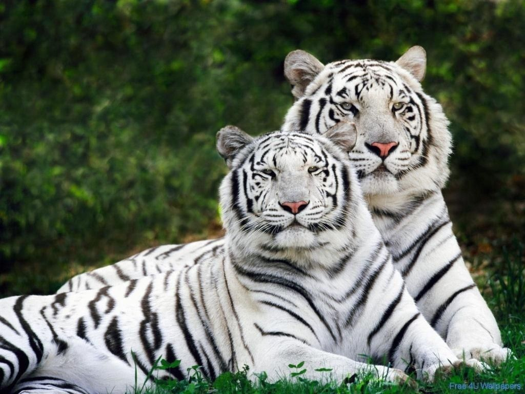animals | beautiful wild animals desktop wallpapers, photography