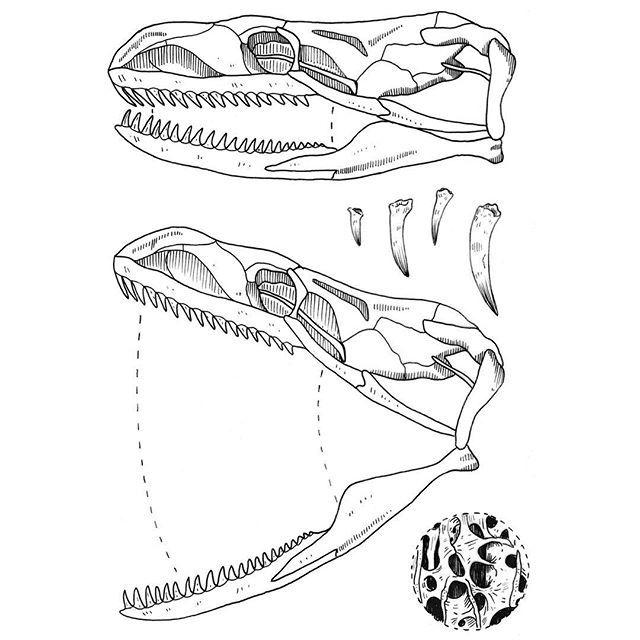 Snake skull diagram   Tattoo Inspo in 2019   Skeleton