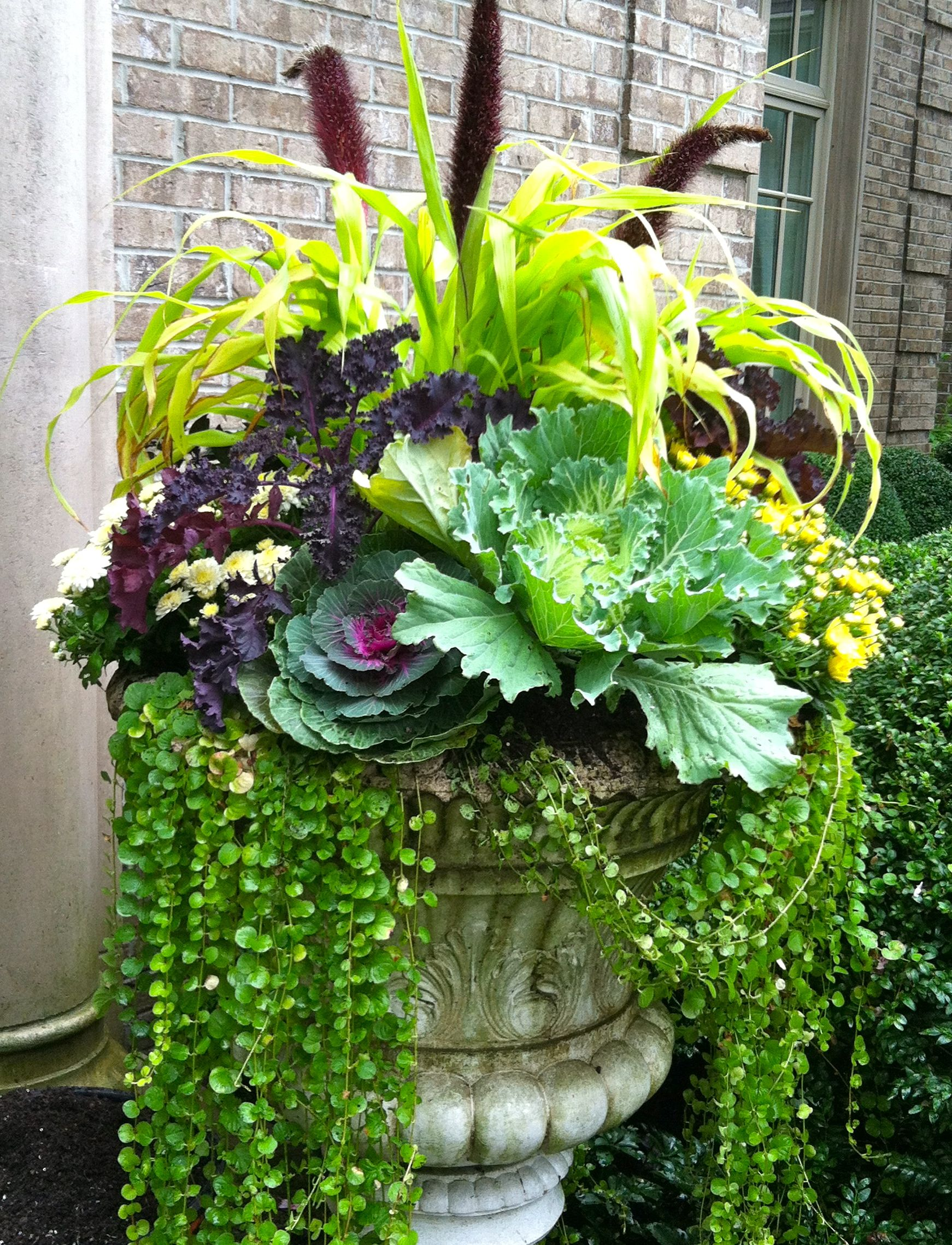 My favorite | Outdoor Containers | Pinterest | Gardens, Container ...