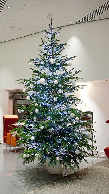 Christmas Trees  Indoor Garden Design