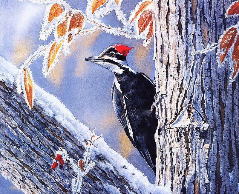 [EndLiss scans - Wildlife Art] Susan Bourdet - Pileated Woodpecker
