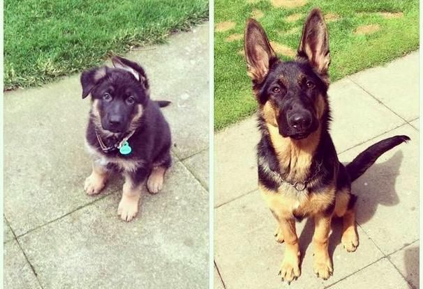 Before And After Photos Show Just How Fast Puppies Grow Up
