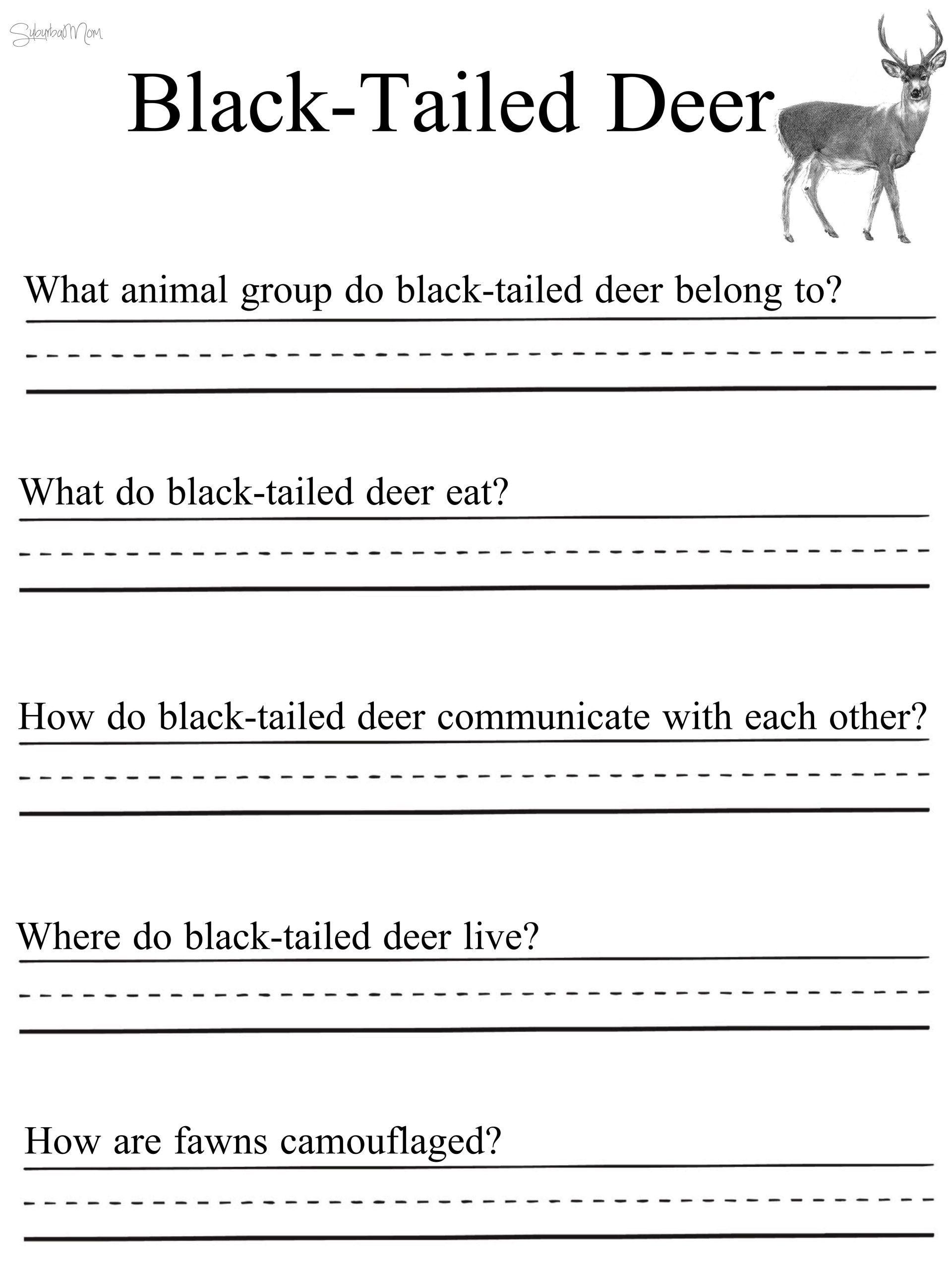 2nd Grade Habitat Worksheets in 2020   Preschool math worksheets [ 2560 x 1920 Pixel ]