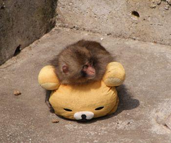 新年明けましておめでとうございます 十二支今年は申年 リラックマ 猿の画像です リラックマ好きブログ 美しい生物 可愛すぎる動物 リラックマ