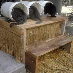 Photo of Los mejores refugios para animales construidos con paletas