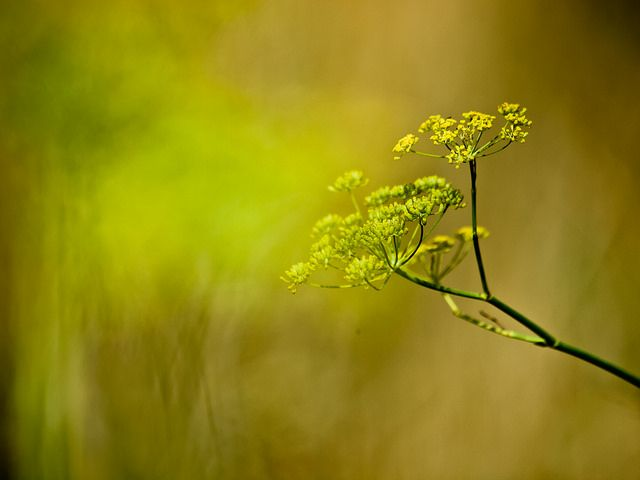 Sweet Yellow | Flickr - Photo Sharing!
