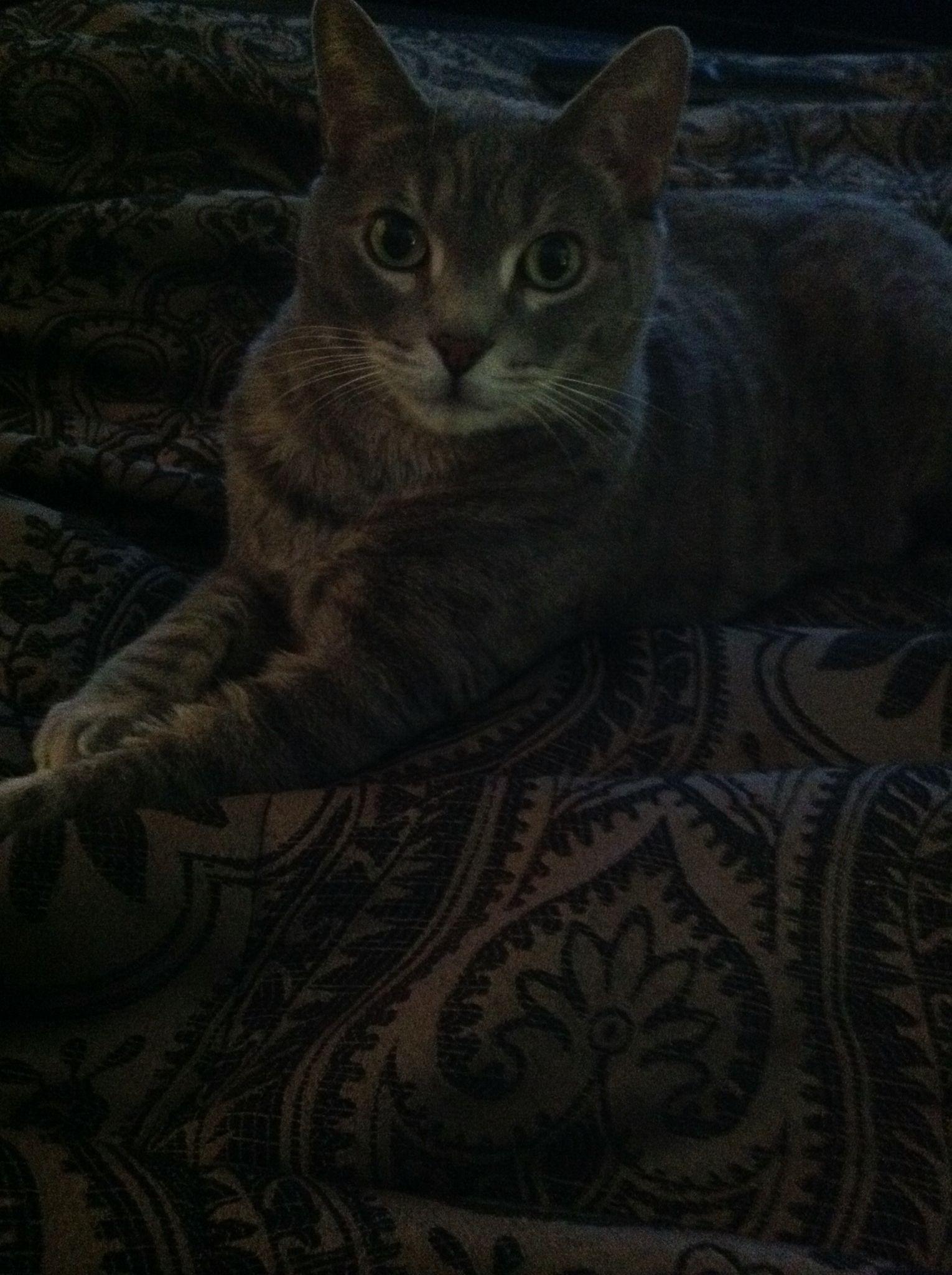 My boy Bubba....miss him so much.