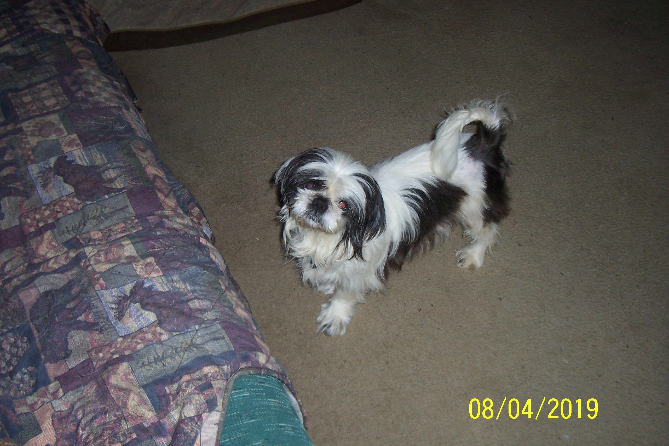 Dogs For Adoption Petfinder Dog Adoption Pet Adoption Dogs