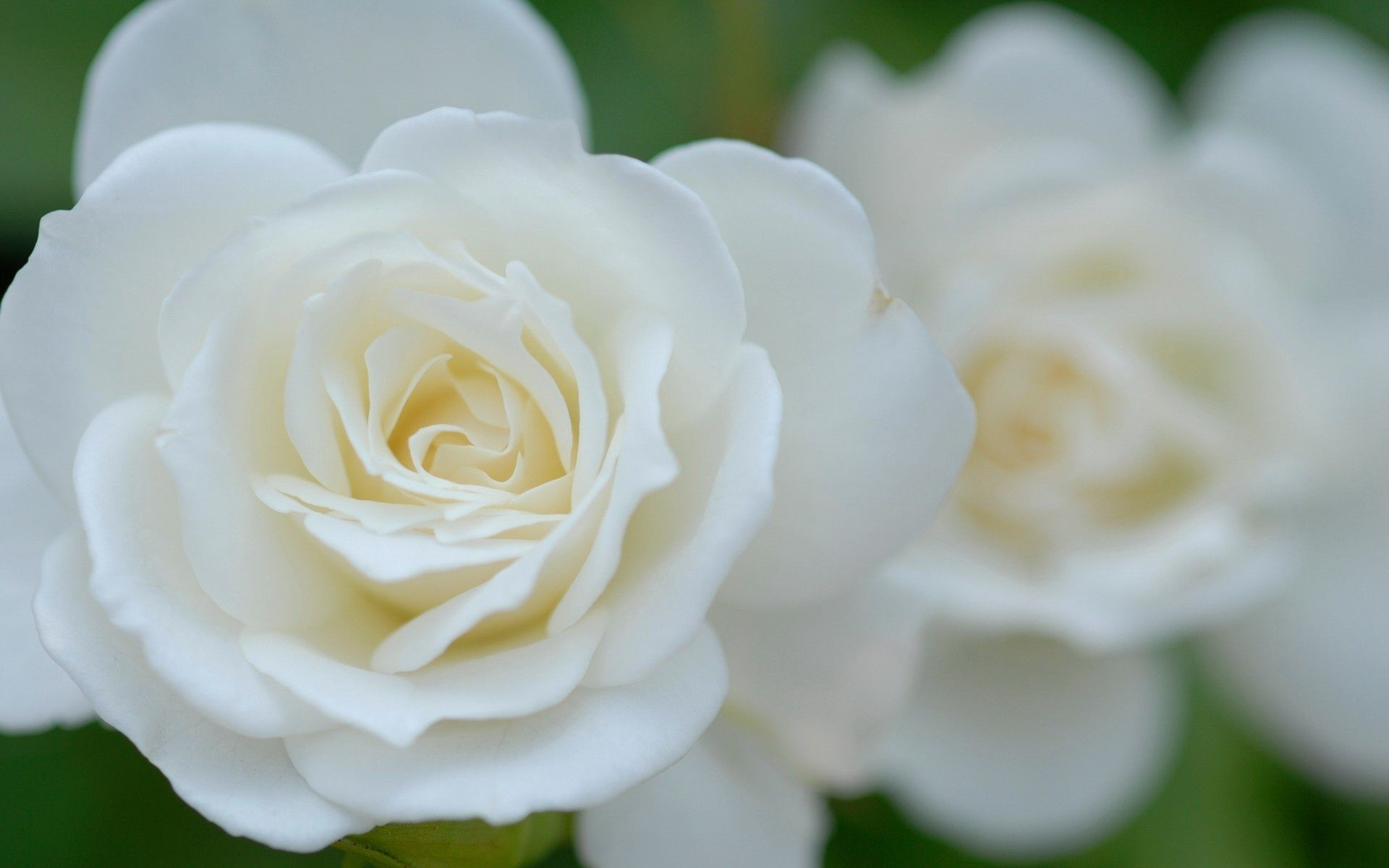 Pin By Vickie Collins On Rose