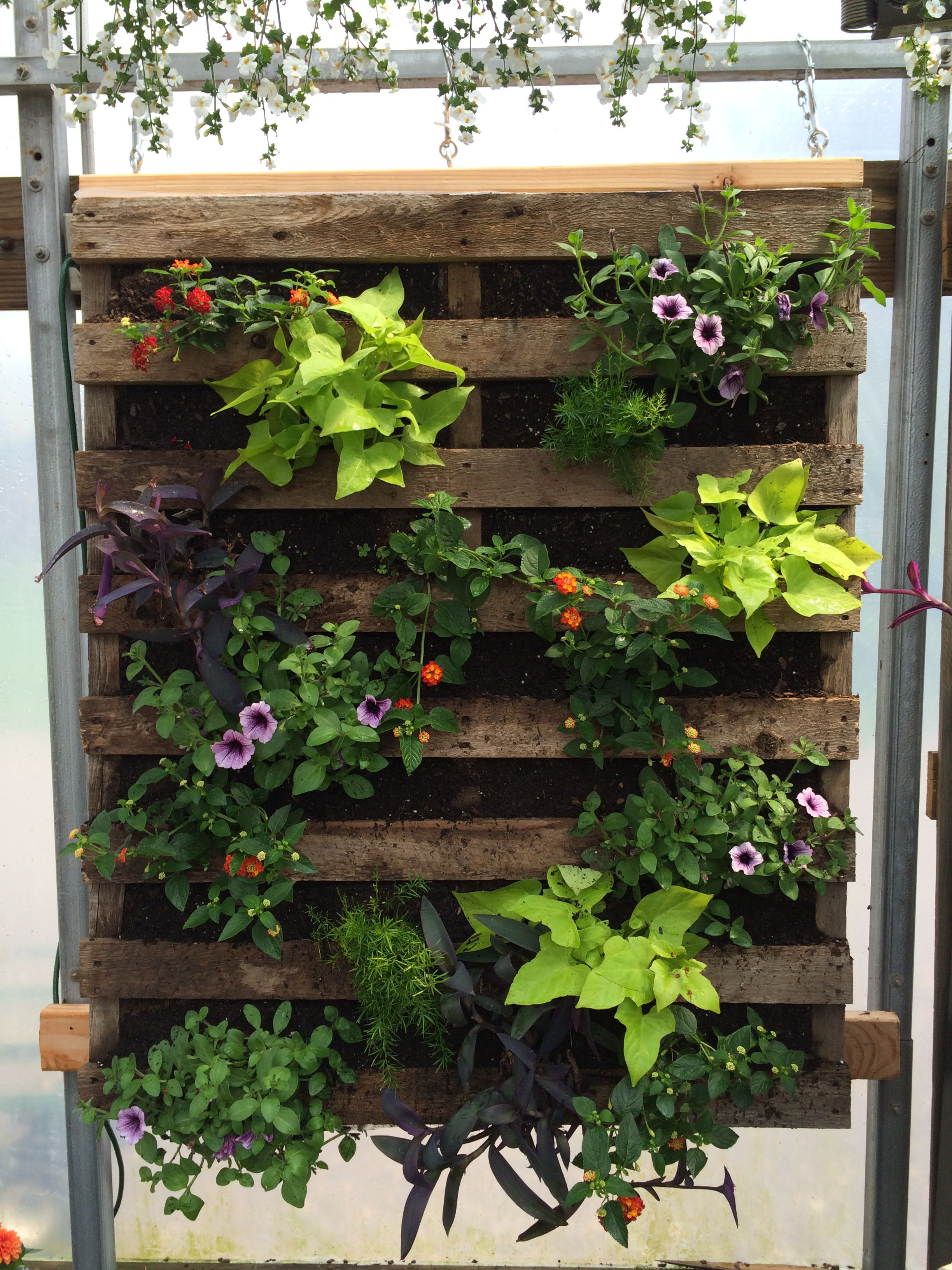 Cool vertical garden idea using a pallet.  Credit to Bromms Lullaby Farm, Bucks County, PA