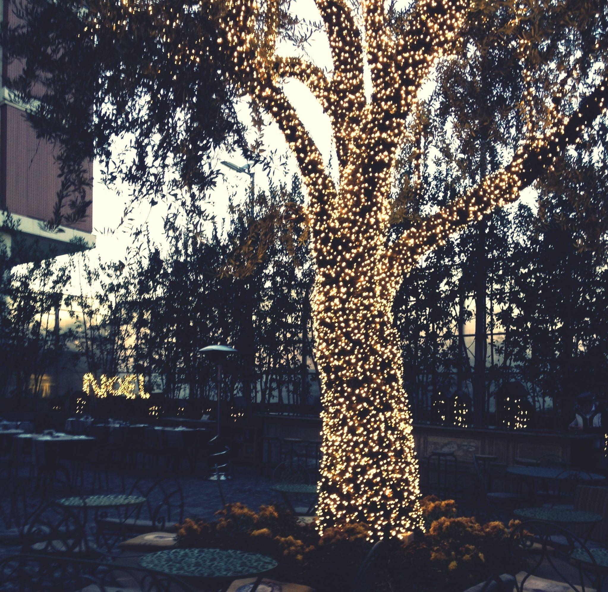 Per chi avesse un giardino con qualche albero con luci da for Luci da giardino