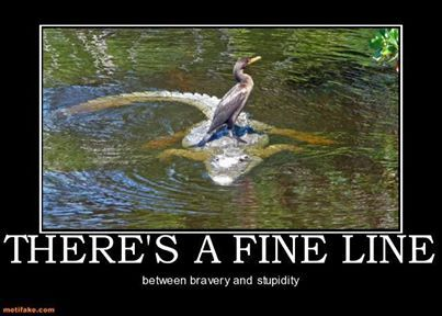 Image result for Bravery vs stupidity